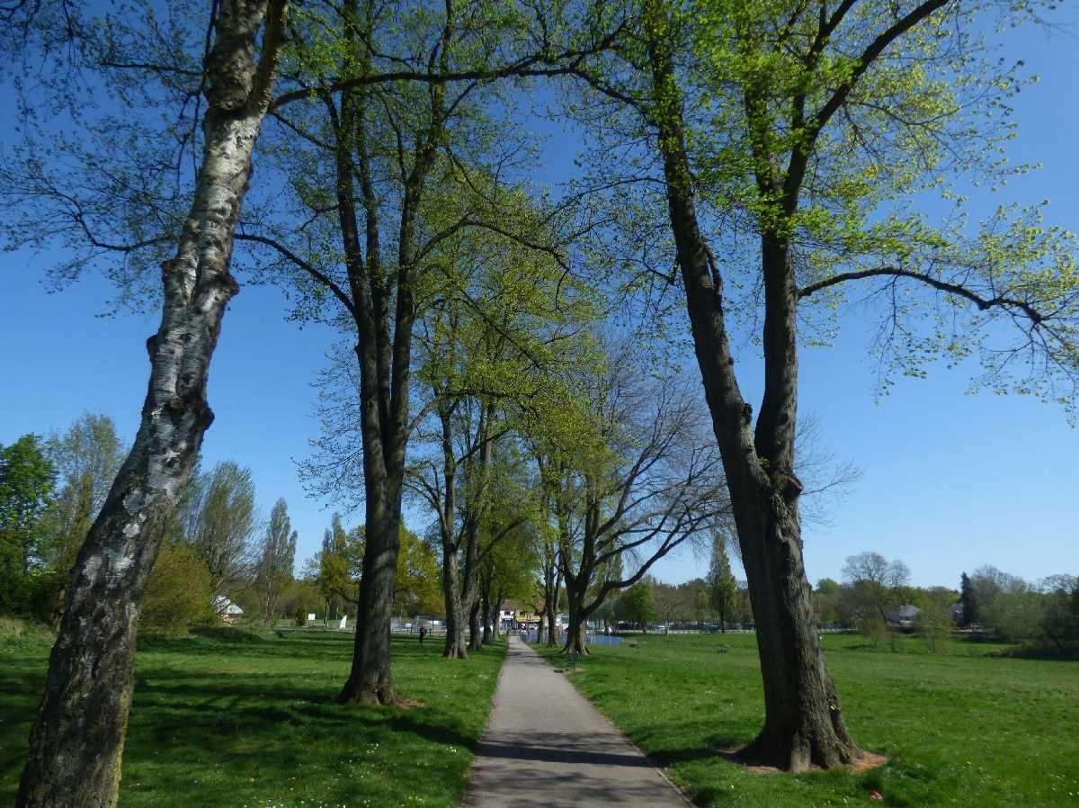 Fox Hollies Park