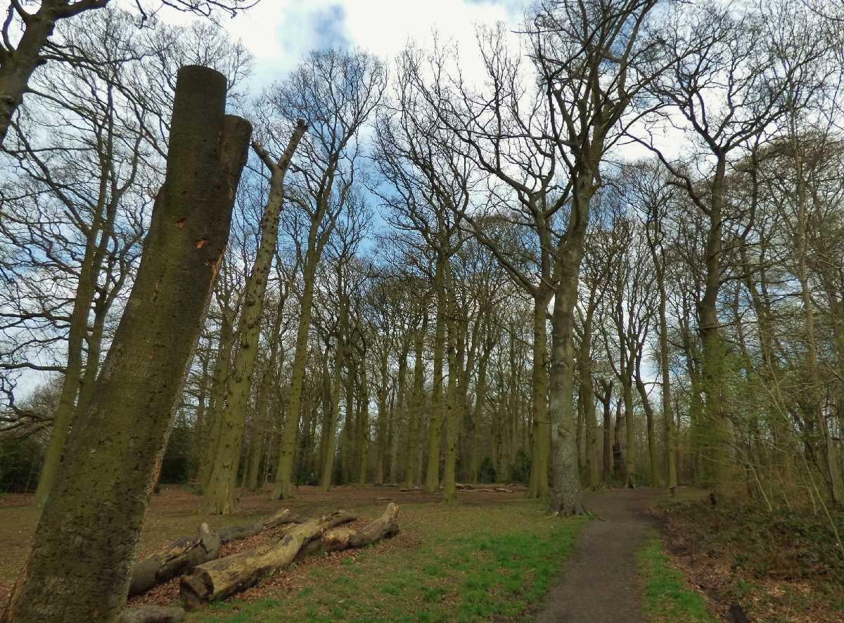 Holders+Lane+Woods%2c+Birmingham+-+A+wonderful+open+space!