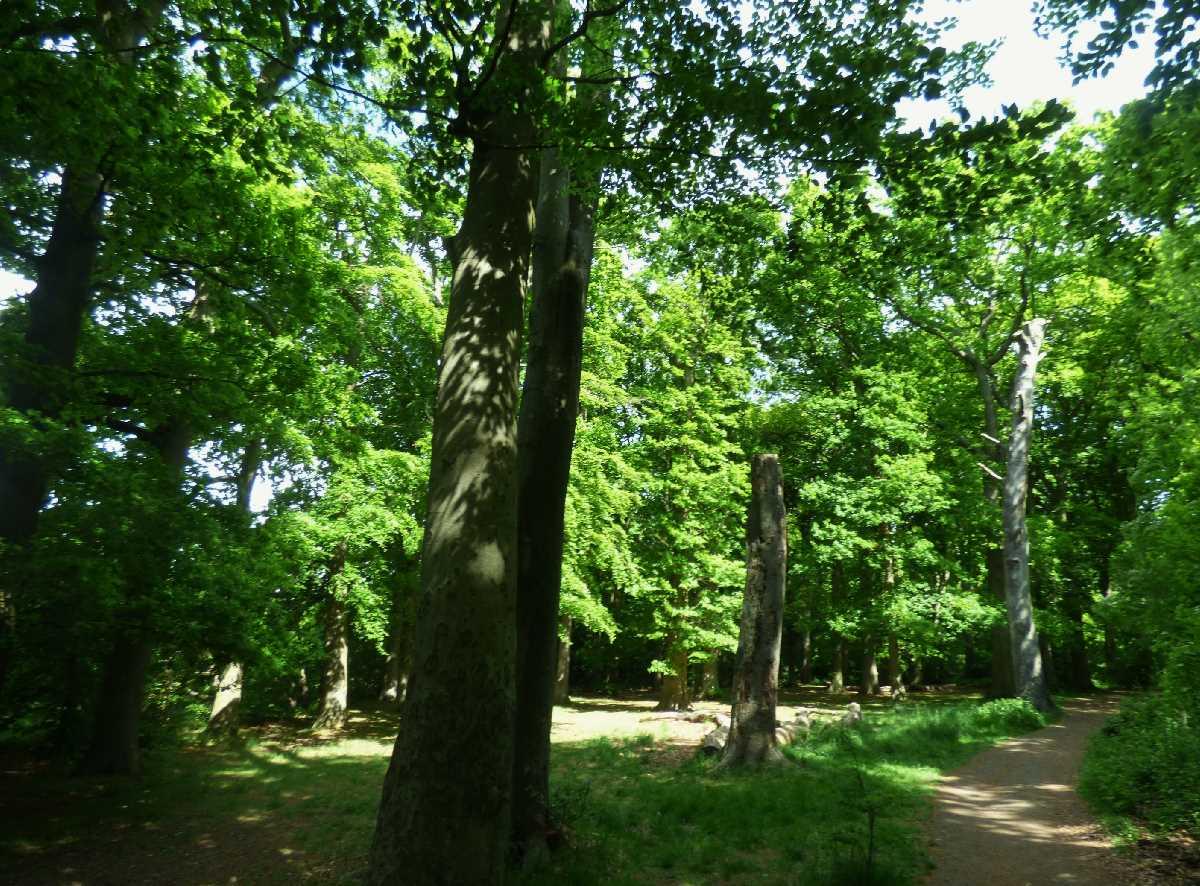 Holders Lane Woods