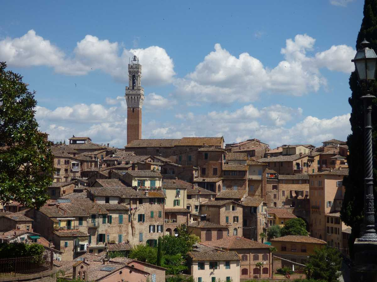 Siena Skyline with Torre del Mangia